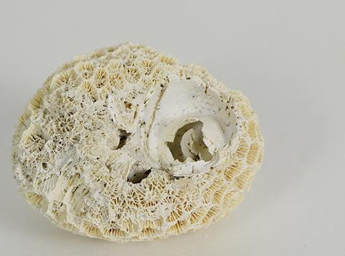 coral_head