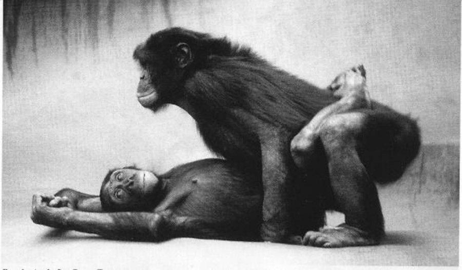 bonobos_sex