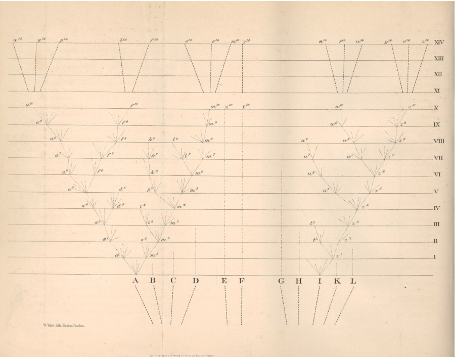 origin-of-species-diagram-full-size