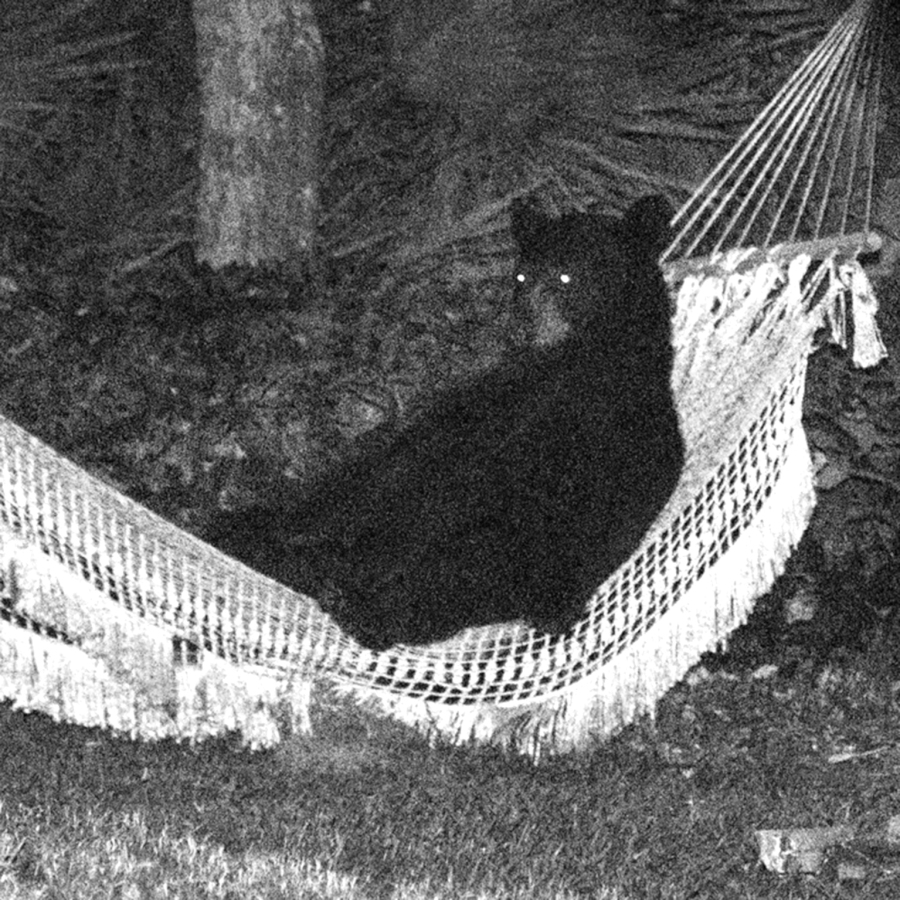hammock bear