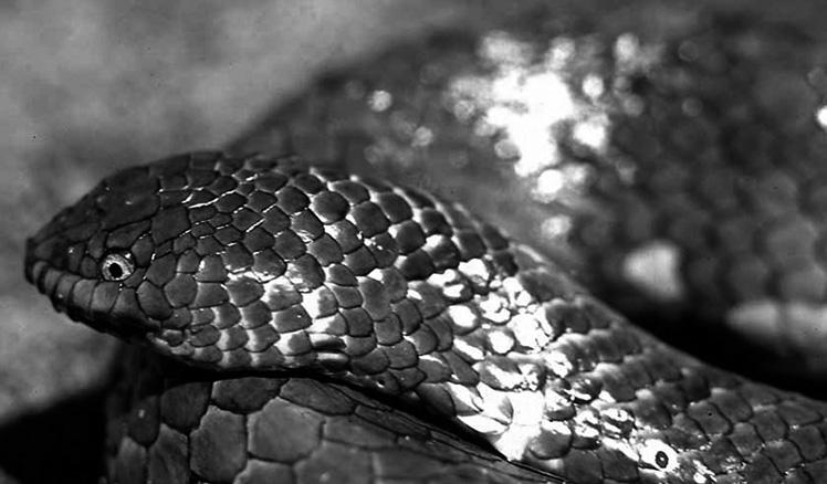 sea_snake
