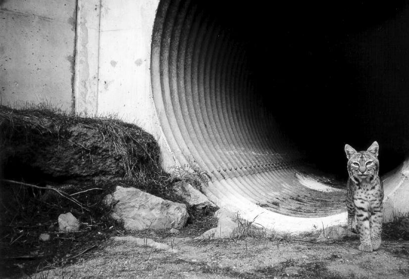 corridor-bobcat copy