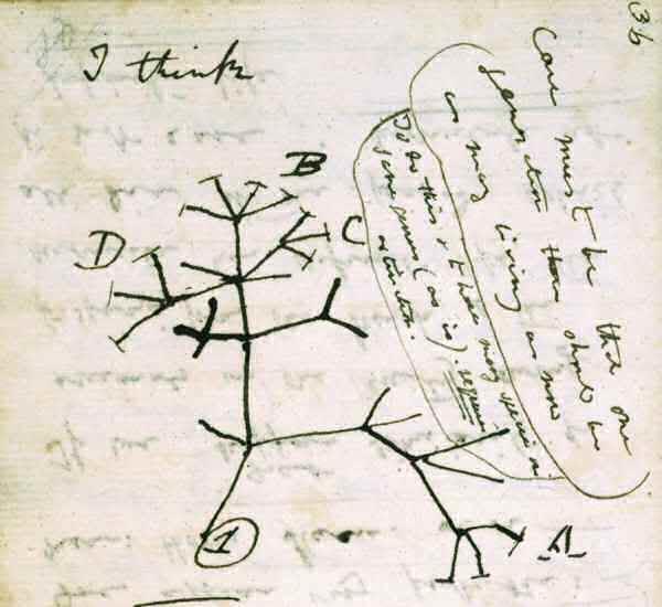 darwin-tree2
