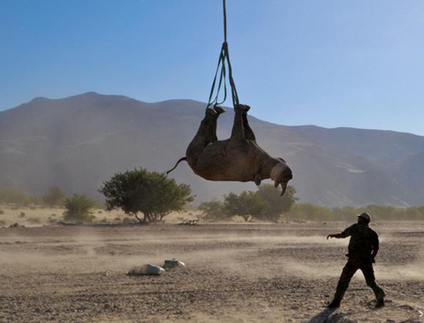 airborne-rhino