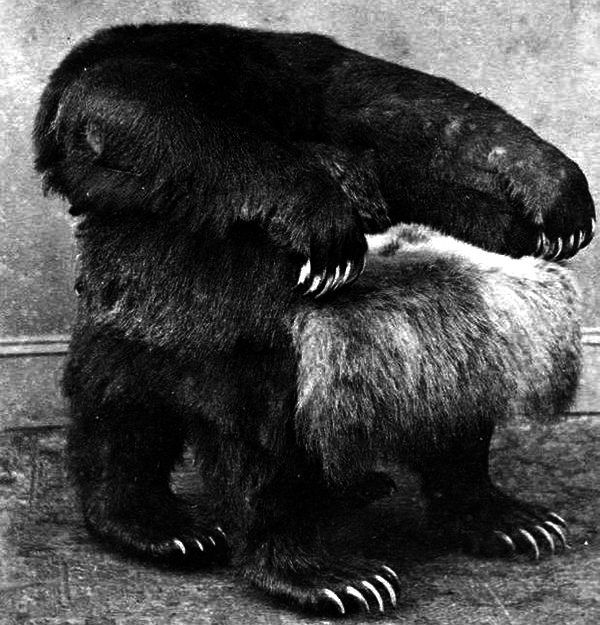 bearchair