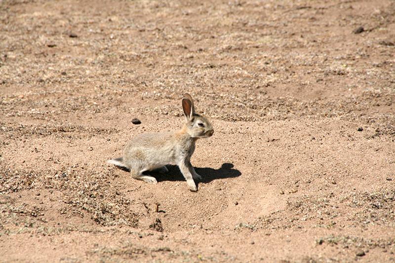 rabbitAZ3_800